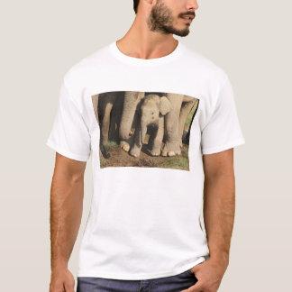 Indian Elephant calf,Corbett National Park, T-Shirt