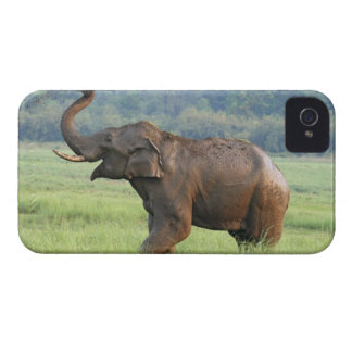 Indian Elephant dust bathing,Corbett National iPhone 4 Covers