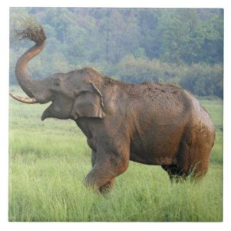 Indian Elephant dust bathing,Corbett National Tile