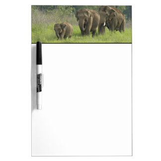 Indian Elephant family coming out of Dry Erase Boards