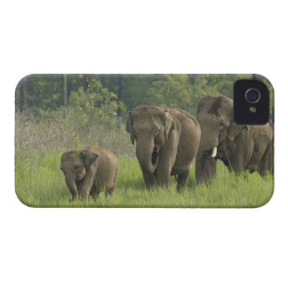Indian Elephant family coming out of iPhone 4 Case-Mate Case