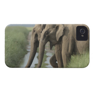 Indian Elephants crossing the track, Corbett Case-Mate iPhone 4 Cases