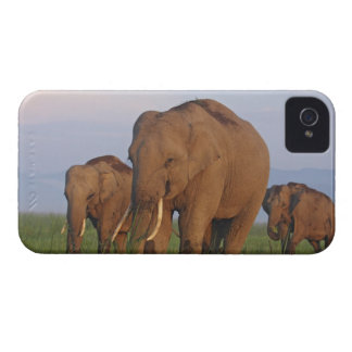 Indian Elephants in the grassland,Corbett iPhone 4 Cases