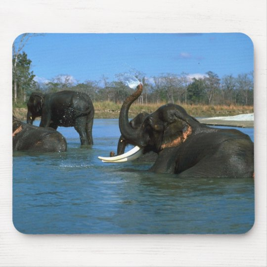 Indian Elephants lying down, bathing Mouse Pad