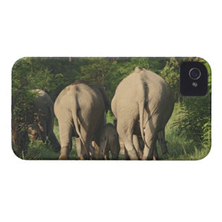 Indian Elephants on the jungle track,Corbett Case-Mate iPhone 4 Cases