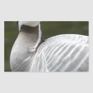 Indian goose with a water background