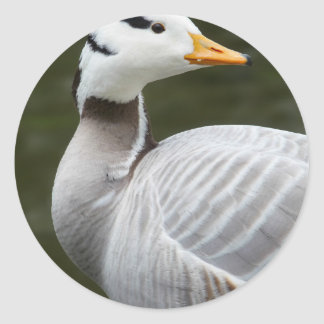Indian goose with a water background round sticker
