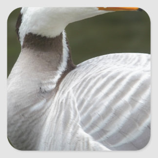Indian goose with a water background square sticker