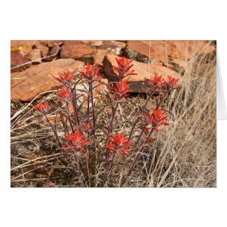 Indian Paint Brush Blossoms Card