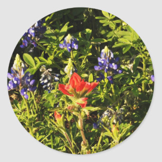 Indian Paint Brush & Blue Bonnetts Classic Round Sticker