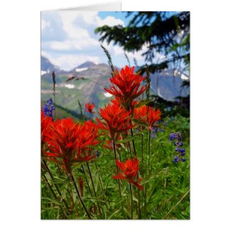 Indian Paint Brush Card