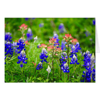 Indian Paintbrush And Bluebonnets Card