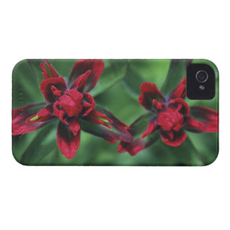 Indian Paintbrush, Banff NP, Alberta, Canada 2 iPhone 4 Covers