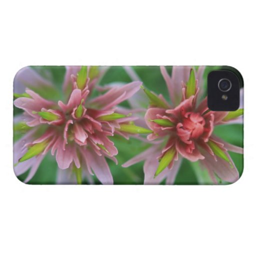 Indian Paintbrush, Banff NP, Alberta, Canada Case-Mate Blackberry Case
