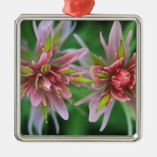 Indian Paintbrush, Banff NP, Alberta, Canada Silver-Colored Square Ornament