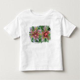 Indian Paintbrush, Banff NP, Alberta, Canada Toddler T-shirt