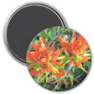 Indian Paintbrush Castilleja Magnet