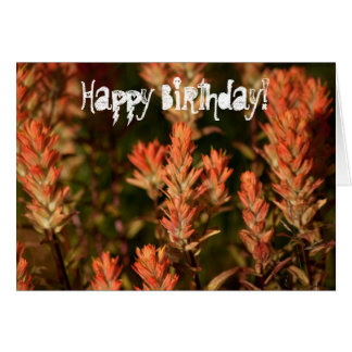 Indian Paintbrush; Happy Birthday Card