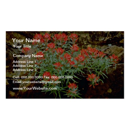 Indian Paintbrush in Zion National Park, Utah Red Business Card Template