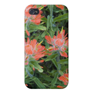 Indian paintbrush wildflowers in the Many iPhone 4 Covers