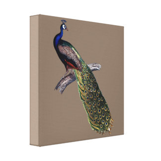 Indian peacock canvas print