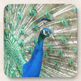 Indian Peacock Drink Coaster