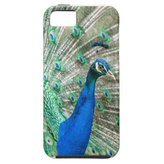 Indian Peacock iPhone 5 Cover