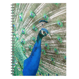 Indian Peacock Notebooks