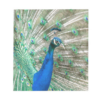 Indian Peacock Notepad
