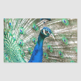 Indian Peacock Sticker