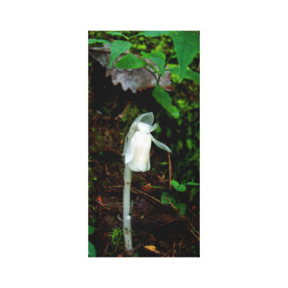 Indian Pipe Canvas Print