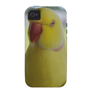 Indian Ringneck in the Shade Case-Mate iPhone 4 Covers