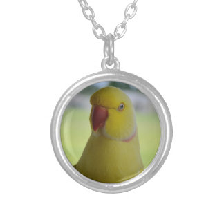 Indian Ringneck in the Shade Silver Plated Necklace
