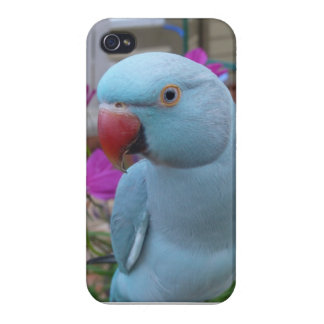 Indian Ringneck Iphone 4 case