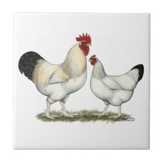 Indian River Chickens Tile