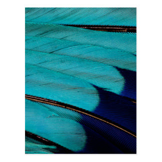 Indian Roller Feather Abstract Postcard