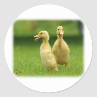 Indian Runner Ducklings 9W029D-024 Classic Round Sticker