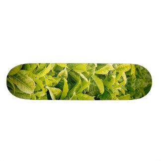 Indian variety of tea custom skateboard