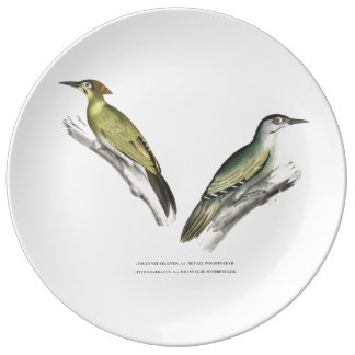 Indian Woodpeckers Plate