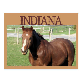 INDIANA Horse Postcard
