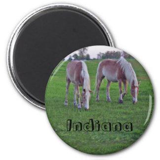 Indiana Horses Magnet