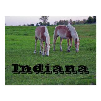 Indiana Postcard