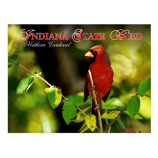Indiana State Bird - Northern Cardinal Postcard