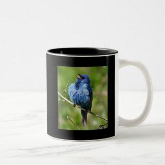 Indigo Bunting 1, Hot All Bird Actionwww.Birdch... Two-Tone Coffee Mug