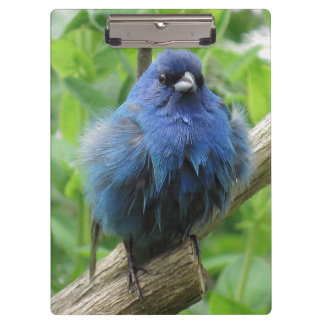 Indigo Bunting Bird Wildlife Animal Clipboards