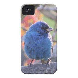 Indigo Bunting iPhone 4 Case-Mate Case