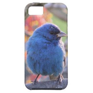 Indigo Bunting iPhone 5 Case
