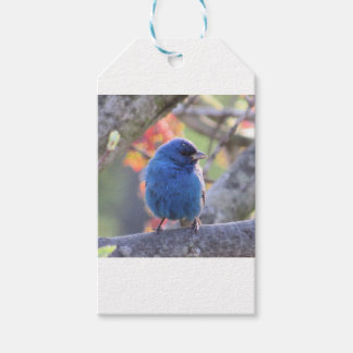 Indigo Bunting Pack Of Gift Tags