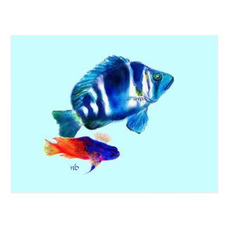 Indigo Fish, Fairy Basslet Postcard