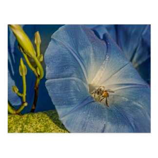 Indigo Morning Glory And Honeybee Cards